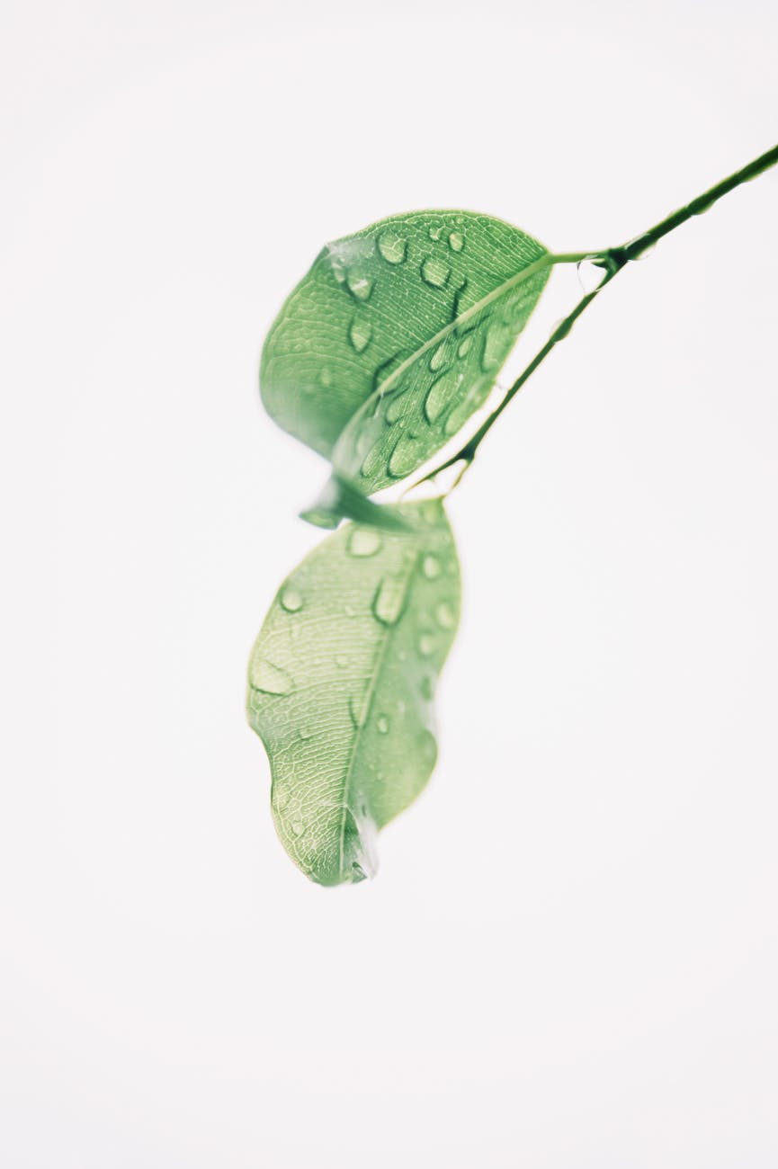 photography of wet green leaves